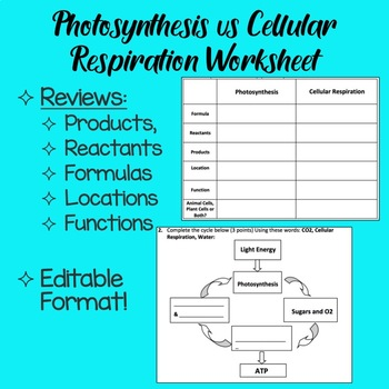 Photosynthesis V Cellular Respiration Worksheets Teaching