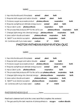 Photosynthesis/Cellular Respiration
