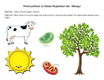 Photosynthesis/Cellular Respiration Place Mat Activity