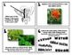 Photosynthesis, Pollination, and Parts of a Flower SCOOT / Task Cards