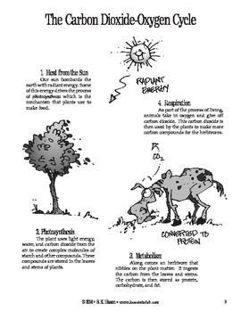 Photosynthetic Funnel (Botany)