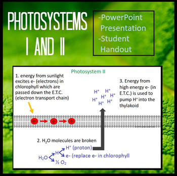 Photosystems I and II of Light Dependent Reactions of Photosynthesis