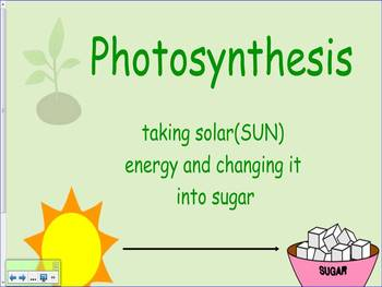 Photosythesis for Kids