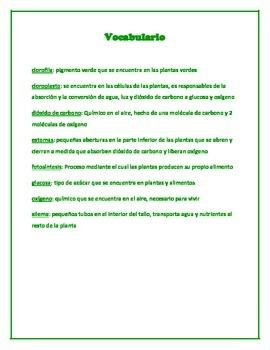 Photsynthesis (English/Spanish) Cloze test and Vocabulary List