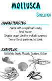Phyla Posters- Mollusca