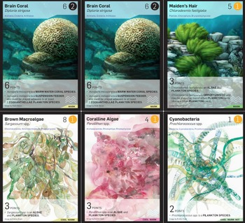 Phylo: Educational Ecosystem Trading Card Game - Coral Reef Deck