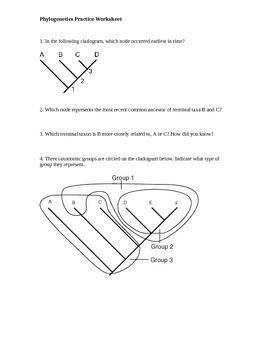 Phylogenetics & Cladogram Practice