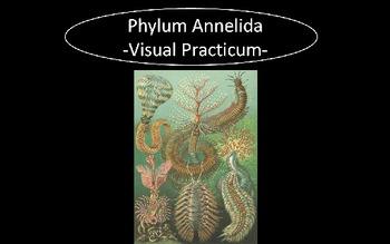 Phylum Annelida (Segmented Worms) Visual Practicum Test