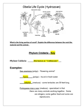 Phylum Cnidaria Student Notes and Teacher guide (Jellyfish)