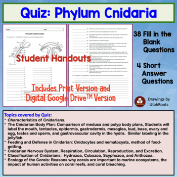 Phylum Cnidaria (hydra, jellyfish) quiz or homework