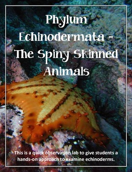 Phylum Echinodermata - The Spiny Skinned Animals