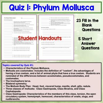 Phylum Mollusca Quiz / Homework
