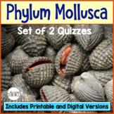 Phylum Mollusca Quiz Set