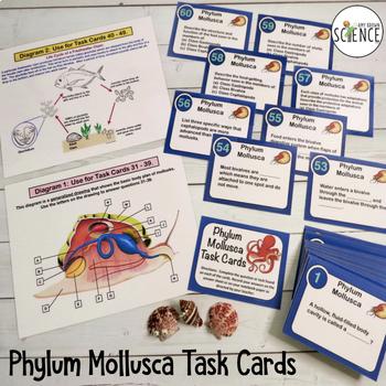 Phylum Mollusca Task Cards