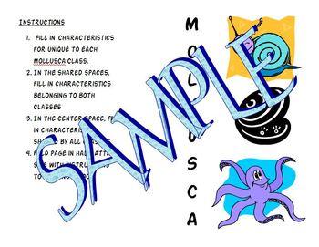 Phylum Mollusca Triple Venn Diagram Interactive Notebook Foldable