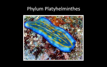 Phylum Platyhelminthes (Flatworms) PowerPoint Presentation