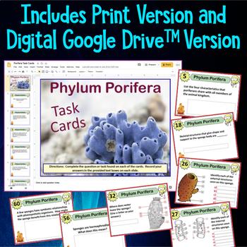 Phylum Porifera (Sponges) Task Cards