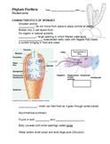 """Phylum Porifera - Student Notes and Teacher guide on """"Sponges"""""""