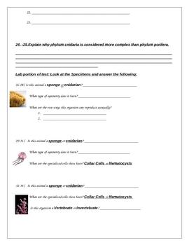 Phylum Porifera/Cnidaria Test I and Key (Sponges and Jellyfish)