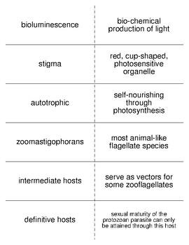 Phylum Sarcomastigophora Vocabulary Flash Cards for Invertebrate Biology