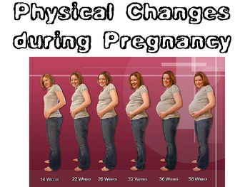 Physical Changes During Pregnancy for Child Development or Parenting FCS