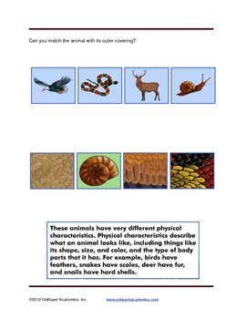 Physical Characteristics of Animals