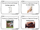 Physical & Chemical Changes Flash Cards