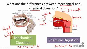 Physical & Chemical Changes within the Digestive System Exit Ticket