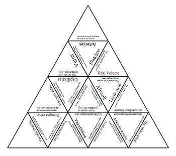 Physical Education Cardio-Respiratory system Tarsia Triangle puzzle