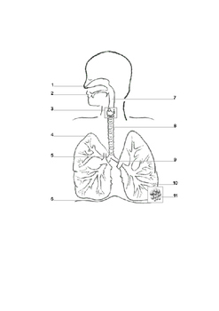 Physical Education: Human Body Respiratory System QR Code Activity