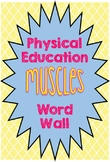 Physical Education Muscles Word Wall