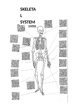 Physical Education: Skeletal System QR Code Activity