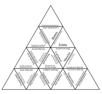 Physical Education. The lever systems.. Tarsia Triangle puzzle