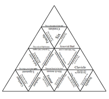 Physical Education. The skeletal system. Tarsia Triangle puzzle