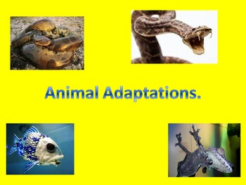 Physical and Behavioral Adaptations