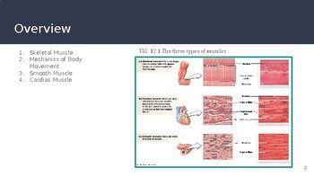 Physiology Chapter 12 Power Point Muscles