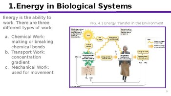 Physiology Chapter 4: Energy and Cellular Metabolism