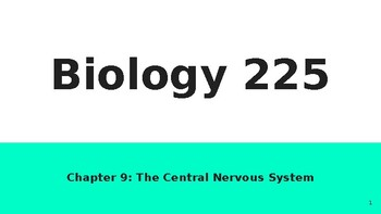 Physiology Chapter 9 CNS