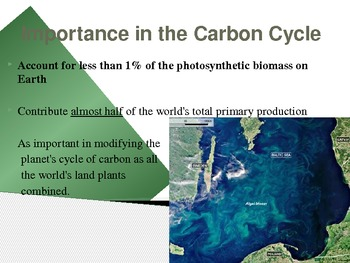 Phytoplankton Overview Presentation