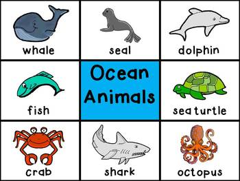 Picture Cards - Ocean Animals