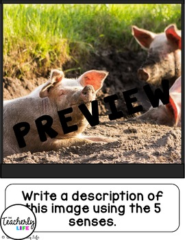 Picture Photo Writing Prompts - Animals