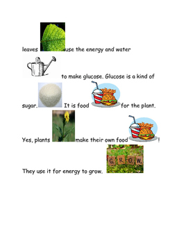 Picture Stories What do plants need