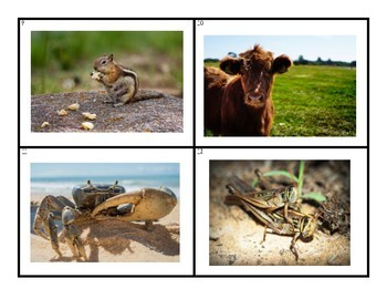 Picture Vocabulary Library: Animals