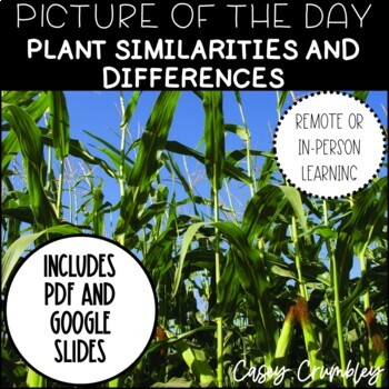 Picture of the Day- Plants Similarities and Differences