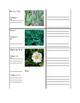 Piedmont Plants Scavenger Hunt