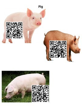 Pig Facts