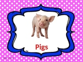Pig Facts Power Point