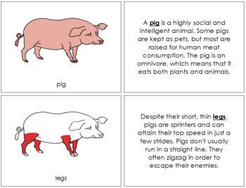 Pig Nomenclature Book - Red