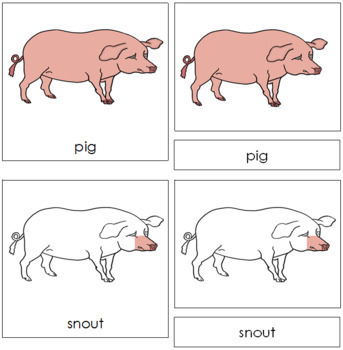 Pig Nomenclature Cards