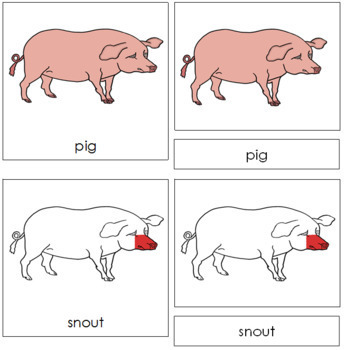 Pig Nomenclature Cards - Red
